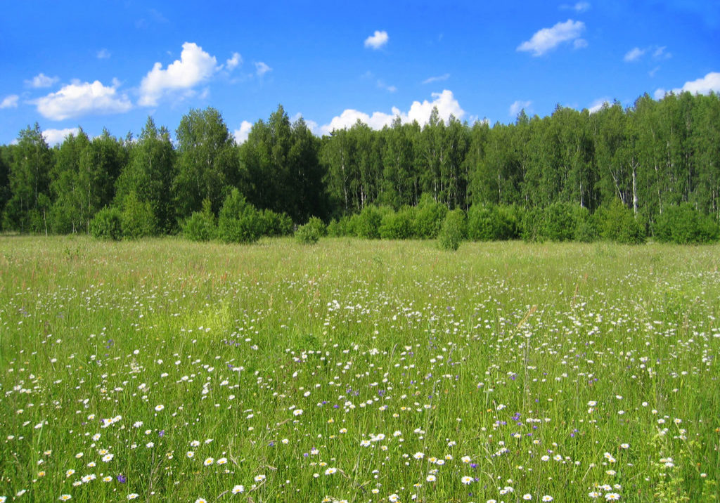 Green meadow, forest and bright blue sky with white clouds